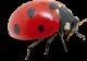 ladybird-web-ltx
